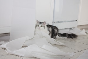silver ragamuffin playing with paper