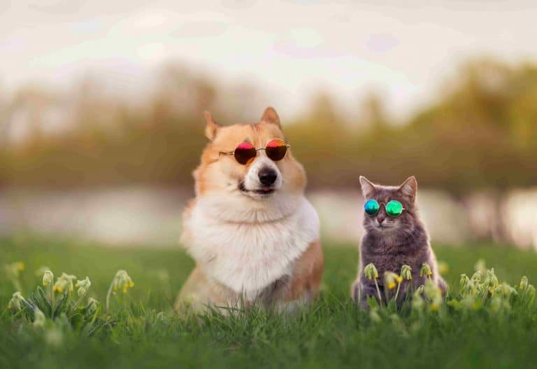 cool cat and dog with sunglasses